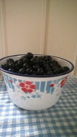 blåbärstider