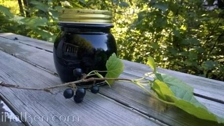 svartvinbarsgele